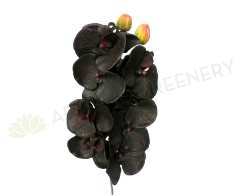F0114 Phalaenopsis Orchid Black Real Touch 75cm