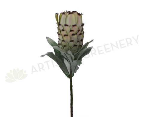 F0133 Mink Protea / Oleander Leaf Protea Single Stem 74cm Green