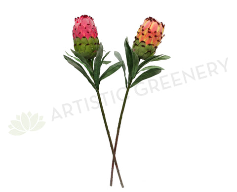 F0133 Protea Neriifolia Single Stem 74cm Red / Peach