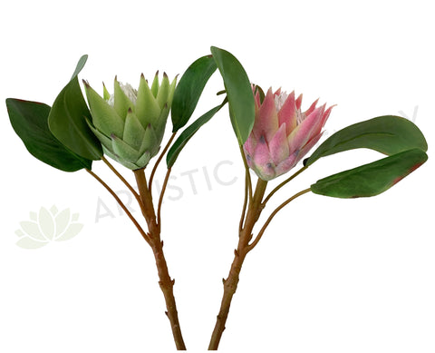 F0160SML-N King Protea Single Stem 53cm Light Green / Pink