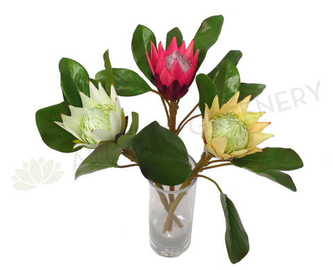 F0160 SML King Protea Single Stem 50cm 5 Colours
