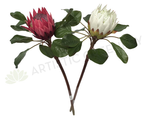 F0160 Giant King Protea Single Stem 80cmcm White / Dark Pink