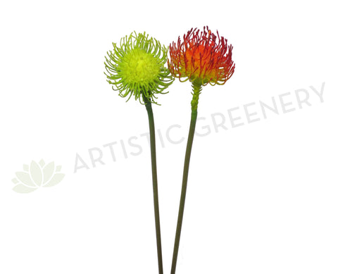 F0184 Pincushion Protea / Leucospermum Single Stem 70cm Green / Red