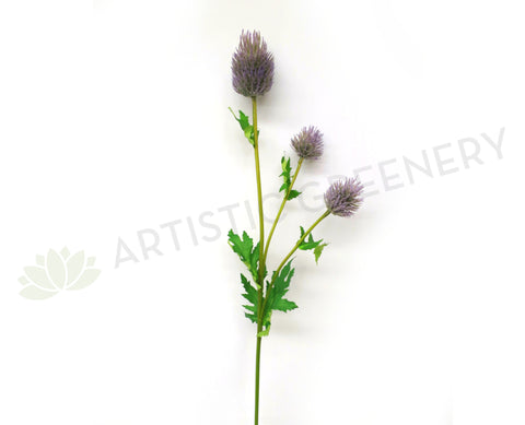 F0187 Eryngium Thistles / Sea Holly 67cm Purple