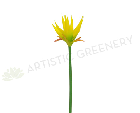 F0197 Musa / Exotic Flower 69cm Yellow (Tropical)