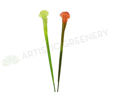 F0201 Sarracenia / Pitcher Plant Flower 82cm 2 Styles
