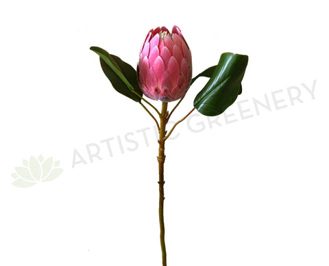F0226 Protea Half Open 2 Sizes Pink Colour