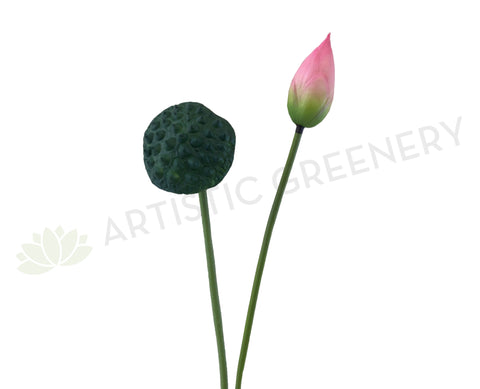 F0258 Lotus Pod 84cm Green / F0259 Water Lily Bud (Pink) 93cm