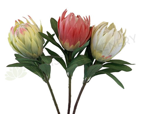 F0278 Protea Obtusifolia 75cm 3 Light Green / Red / White