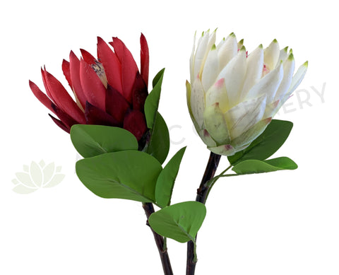 F0302 Protea Stem 65cm Red / White | ARTISTIC GREENERY