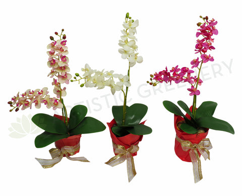 FA1019 Small Orchid Arrangement with Pot 3 Colours