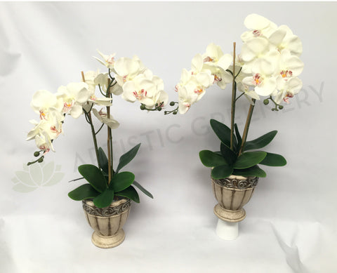 FA1028 - White Orchid Floral Arrangement