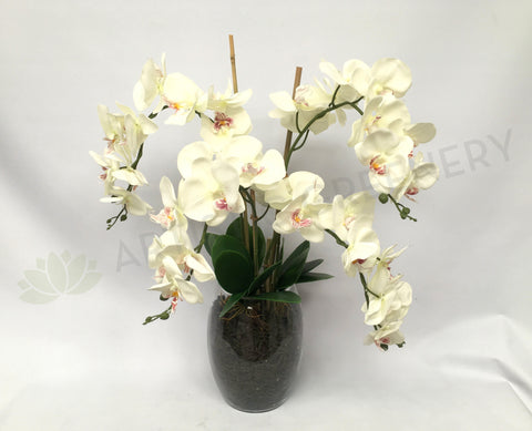 FA1035 - Orchid Arrangement (70cm Height)
