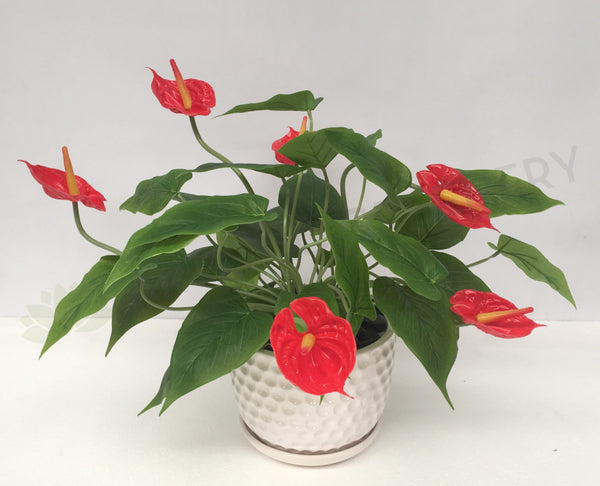 Fa1041 Potted Plant Red Anthurium 40cm High Coffee