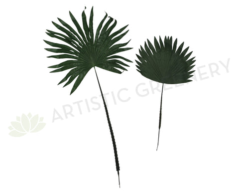 Fan Palm LEA0013 Large 101cm $8 each LEA0014 Small 63cm  $5