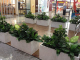 Gloria Jeans Cafe - Mixed Styles Artificial Plants for Planters