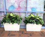 Style A shorter plants $90 hire fee