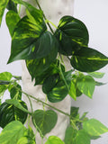 HP0017 Gold Pothos Garland (Large Leaves) 185cm Real Touch Leaves