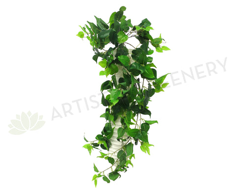 HP0050 Hanging Philodendron 100cm Green (SALE)
