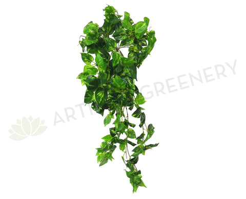 HP0051 Hanging Golden Philodendron 100cm (SALE)