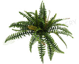 Large hanging fern $40