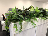 1 Tully Street EAST PERTH - Artificial Plants for Tambour Units & Throughout the Office | ARTISTIC GREENERY