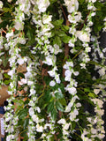 zoom white wisteria flowers