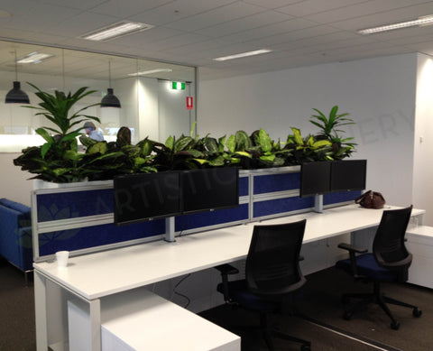 Iluka - Artificial Plants for Filing Cabinets
