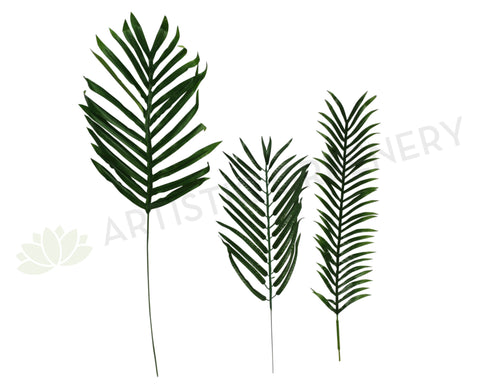 Palm single leaf