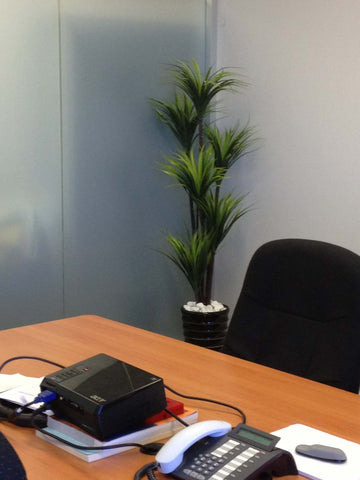 ... Losugen   Artificial Trees In Pots Throughout The Office ...