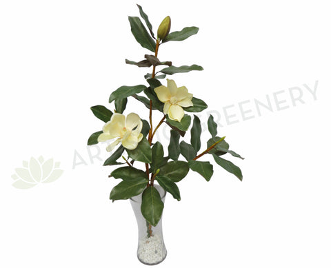 MAGNOLIASET35 Magnolia Plant Set 80cm - Custom Made