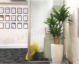 Ozsky Perth Migration Agency - Monstera & Janet Craig Dracaena