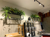 Port City Roasters (South Fremantle) - Artificial Plants for Display Shelves & Hanging Baskets with Plants