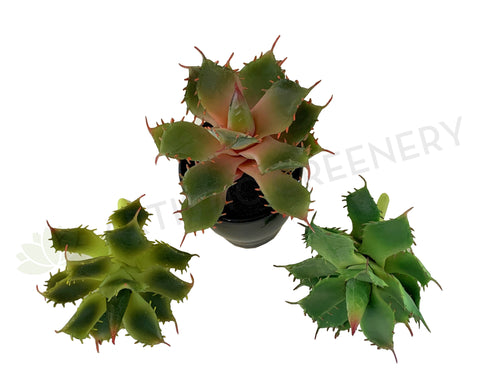 SP0021 Faux Small Cactus 14cm 3 styles for bathroom coffee table home decor | ARTISTIC GREENERY