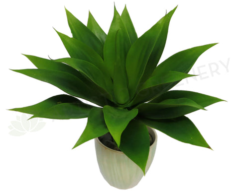 SP0036 Artificial Agave Attenuata