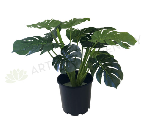 SP0056-60 Monstera / Swiss Cheese plant Plant 60cm (set of 3) Artistic Greenery