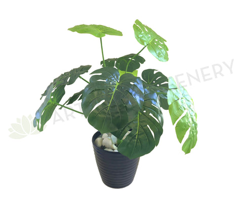 SP0056 SML Monstera / Swiss Cheese plant Plant 45cm Small