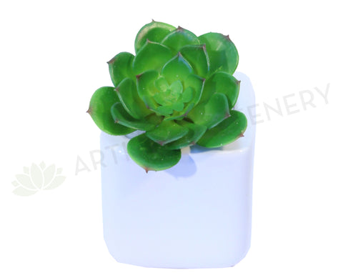 SP0059SML Echeveria Small Real Touch 14cm