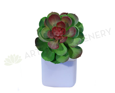 SP0059 Echeveria Small Red Center 14cm