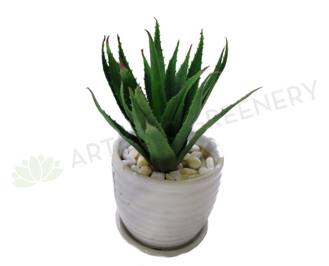 SP0089 Small Aloe Vera 19cm Green