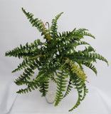 Small hanging fern $29