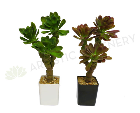 SP0150 Succulent Potted Plant