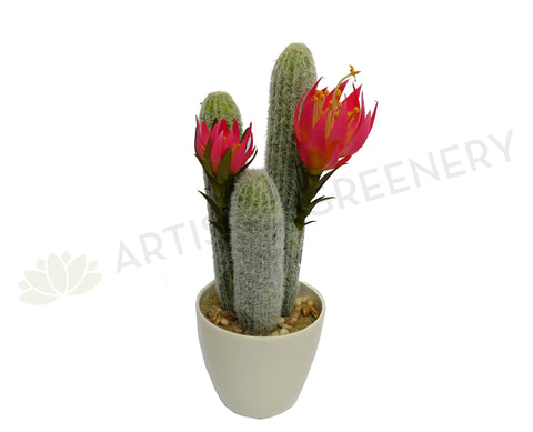 SP0151 Cactus with flower in plastic pot 34cm