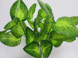 SP0156 Woodland Calamint 37cm Glossy Leaves