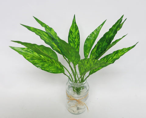 SP0172 Dumb Cane 33cm 2 Pattern