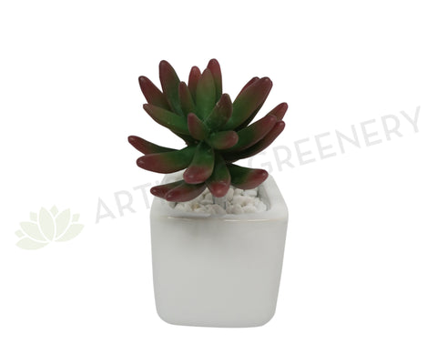 SP0183 Sedum Succulent 15cm Red Tip