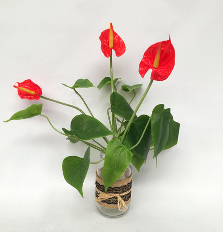 SP0188 Anthurium Bunch Real Touch 34cm Red / Pink