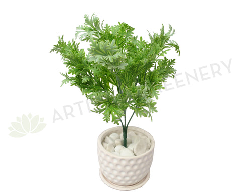 SP0220 Dusty Miller Plant 32cm