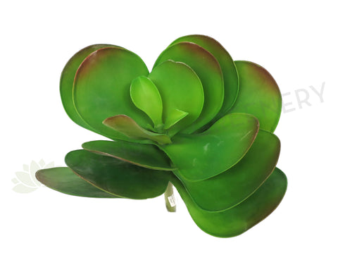 SP0222 Giant Flapjacks Succulent 35cm Green