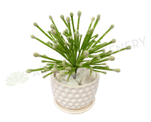 SP0223 Small Green Coral Plant 20cm